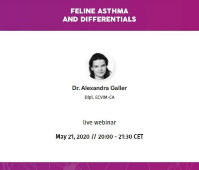 Webinar Feline asthma and differentials