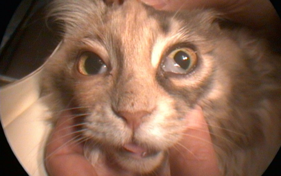 Cat Skin Ulcers Pictures
